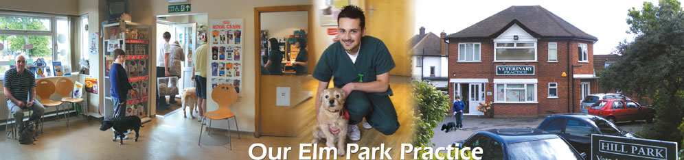 Elm Park Vets Location
